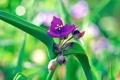 Картинка зелень, цветок, фиолетовый, макро, природа, зеленый, растение