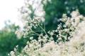 Картинка зелень, лето, трава, макро, свет, деревья, блики