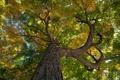 Картинка осень, листья, дерево, ствол, кора, крона
