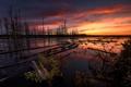 Картинка лес, закат, природа