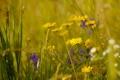 Картинка лето, цветы, природа