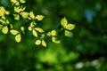 Картинка зелень, веточка, на солнышке, кверху, салатовые листья