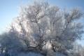 Картинка иней, солнце, Зима, мороз