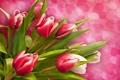 Картинка тюльпаны, сердца, цветы