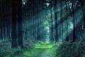Картинка лес, дорожка, зелень, деревья