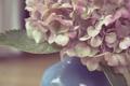 Картинка цветы, лепестки, ваза, розовые, белые