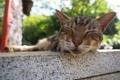 Картинка кот, усы, фон, спит, моська
