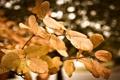 Картинка вода, капельки, блики, листва, размытость, после дождя, листики