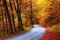 Картинка дорога, осень, лес, деревья, краски