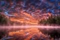 Картинка лес, туман, озеро