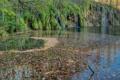 Картинка листья, мох, водопады, Plitvice Lakes, Хорватия, озеро