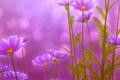 Картинка листья, цветы, green, красота, весна, розовые, Flowers