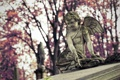 Картинка ангел, Польша, Polska, Kraków, Краков, Rzeczpospolita Polska, Раковицкое кладбище