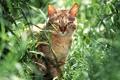 Картинка трава, кот, природа, сидит
