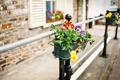 Картинка макро, дом, улица, цветы