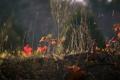 Картинка осень, трава, листья, растение