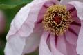 Картинка цветок, макро, природа, розовый