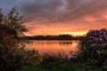 Картинка закат, озеро, Шотландия, кусты, Scotland, рододендроны, водохранилище Баркрейгс