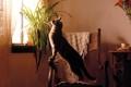 Картинка кошка, кот, комната