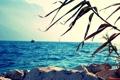 Картинка море, пейзаж, горы, природа, океан, ветка, даль