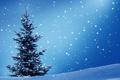 Картинка зима, снег, ёлка