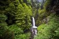 Картинка лес, природа, скалы, водопад