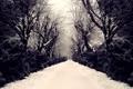 Картинка снег, деревья, человек, аллея