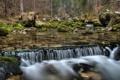 Картинка лес, вода, природа, река, камни, водопад, мох