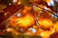 Картинка природа, осень, свет, листва