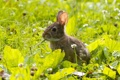 Картинка луг, трава, кролик