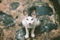 Картинка глаза, кот, улица, лапы, уши