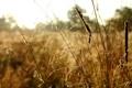 Картинка трава, роса, утро, Осень