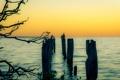 Картинка пейзаж, закат, птицы, озеро