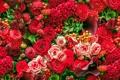 Картинка каллы, розы, целозия, георгины, бегонии