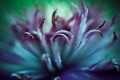Картинка цветок, макро, серединка