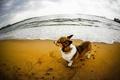 Картинка песок, река, собака