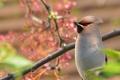 Картинка листья, птица, ветка