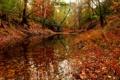 Картинка осень, лес, деревья, пруд.