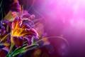 Картинка цветы, лилии, изгибы, усики