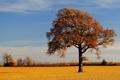 Картинка природа, поле, осень, дерево