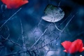 Картинка цветок, природа, лист