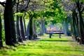 Картинка зелень, парк, скамейки, лавочки