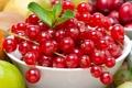 Картинка ягоды, смородина, красная смородина, кислятина