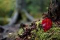 Картинка природа, осень, лист, дерево