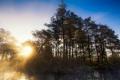 Картинка лес, свет, пейзаж, природа, река
