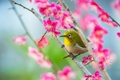 Картинка цветы, птица, клюв, сад, ведка
