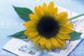Картинка письмо, цветы, подсолнух, почта
