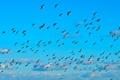 Картинка небо, облака, птицы, стая