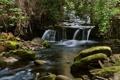 Картинка Листья, Камни, Лес, Деревья, Поток, Природа, Ветки