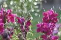 Картинка солнце, цветы, блики, дождь, весна